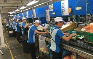 Automatic production line conveyor belt